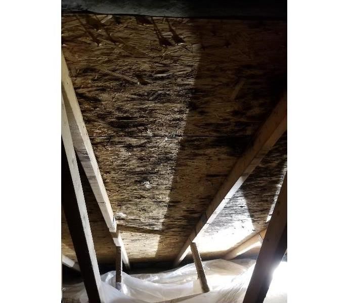 Mold Remediation in an Attic Before